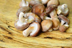 キノコのエルゴステロールからできるビタミンDで骨粗鬆症予防